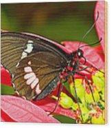Montezuma Cattleheart Butterfly Wood Print