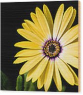 Montgomery County Flower Wood Print