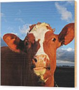 Moo Don't Say Cow Wood Print