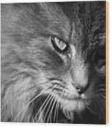 Moody Cat Wood Print