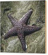 Moody Starfish I Wood Print