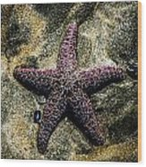 Moody Starfish IIi Wood Print