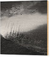 Moody Sunrise With Grasses And Birds Wood Print