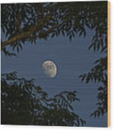 Moon Among The Branches Wood Print