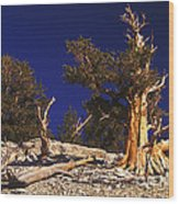 Moon And Bristlecone Pines Wood Print