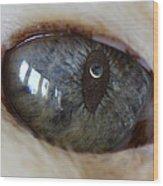 Moon In Cats Eye Wood Print