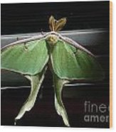 Moon Moth Wood Print