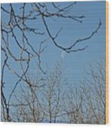 Moon On Treetop Wood Print