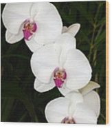Moon Orchid With Purple Center Wood Print