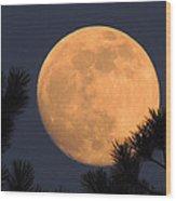 Moon Pines Wood Print