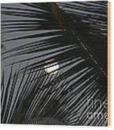 Moon  Through Palm Trees Wood Print