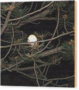 Moon Through Pines Wood Print
