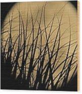 Moon Through The Palms Wood Print