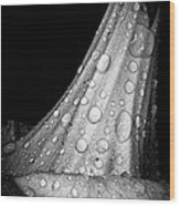 Moonflower And Rainwater  Wood Print