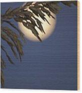 Moonlight Sea Oat Wood Print