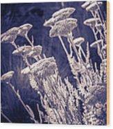 Moonlight Yarrow Wood Print