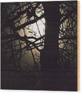 Moonlit Tree In The Forest Wood Print