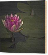 Moonlit Waterlily Wood Print by Jill Balsam