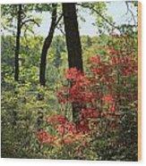 Moore State Park Spring Wood Print