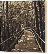 Moores Creek Battlefield Nc Swamp Walk  Wood Print