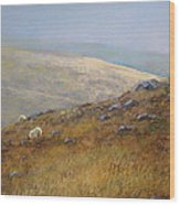 Moorland Sheep Wood Print