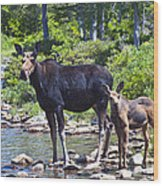 Moose And Baby 4 Wood Print