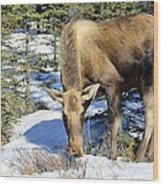 Moose Connection Wood Print