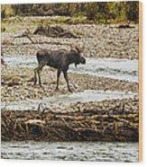 Moose Crossing River No. 1 - Grand Tetons Wood Print