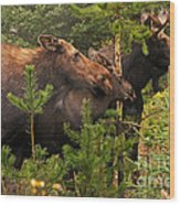 Moose Family At The Shredded Pine Wood Print