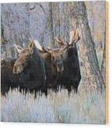 Moose Meeting Wood Print