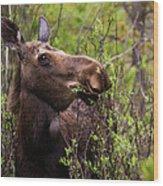 Moose Munch Wood Print