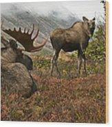Moose Pair On Anchorage Hillside Wood Print