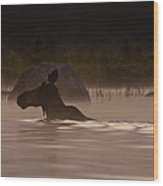 Moose Swim Wood Print