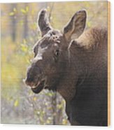 Moose Who Lost His Mother Wood Print