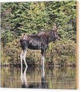 Moose_0609 Wood Print