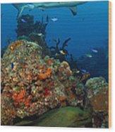 Moray Reef Wood Print