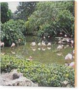More Pink Flamingos Wood Print