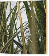 More Tall Grass Wood Print