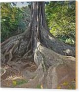 Moreton Bay Fig Tree From Jurrasic Park Wood Print