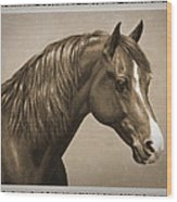 Morgan Horse Old Photo Fx Wood Print