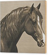 Morgan Horse Painting In Sepia Wood Print by Crista Forest