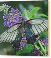 Mormon Butterfly Wood Print
