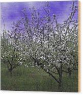 Morning Apple Blooms Wood Print