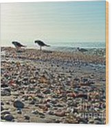 Morning Beach Preen Wood Print