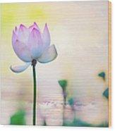 Morning Breeze And Beautiful Lotus Wood Print