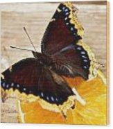 Morning Cloak Butterfly Wood Print
