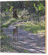 Morning Deer Wood Print