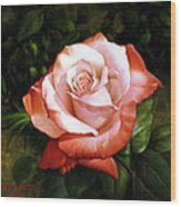 Morning Dew On The Rose Faded Wood Print