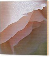Morning Dew Peach Rose Flower Wood Print