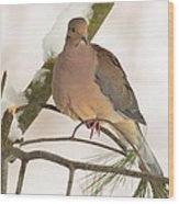 Morning Dove Wood Print